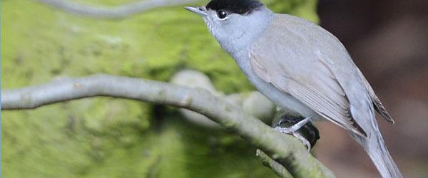 Vogels in het Sarphatipark